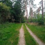 Wo der Waldweg endet...